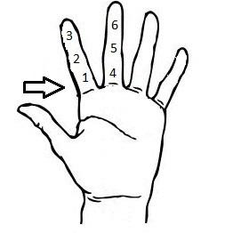12 Fingers